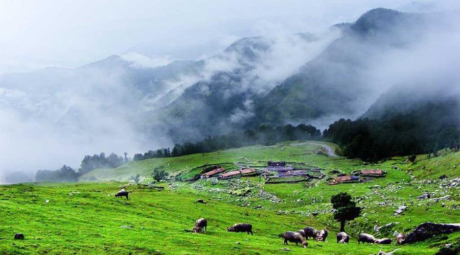 Chopta Valley, Lachen, Gangtok