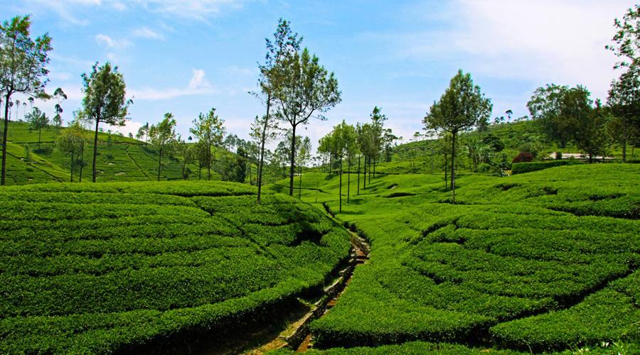 Coonoor, Ooty, Tamil Nadu
