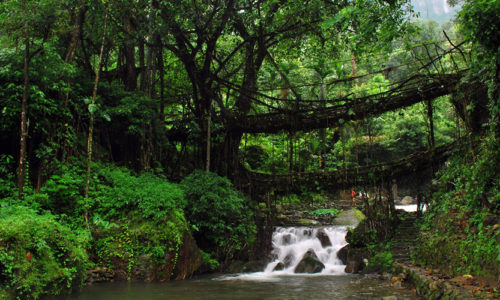 Living Root Bridges, Cherrapunji, Meghalaya