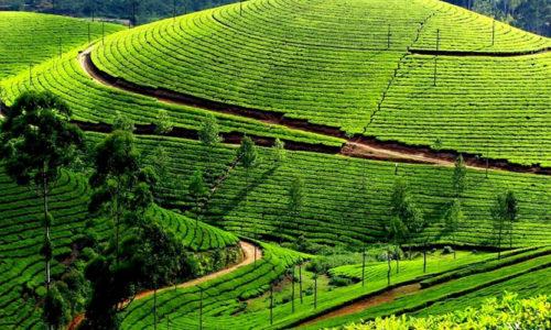Devikulam, Munnar, Kerala