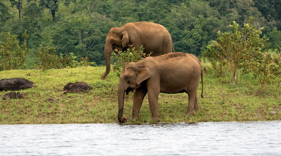 Periyar National Park, Thekkady, Kerala