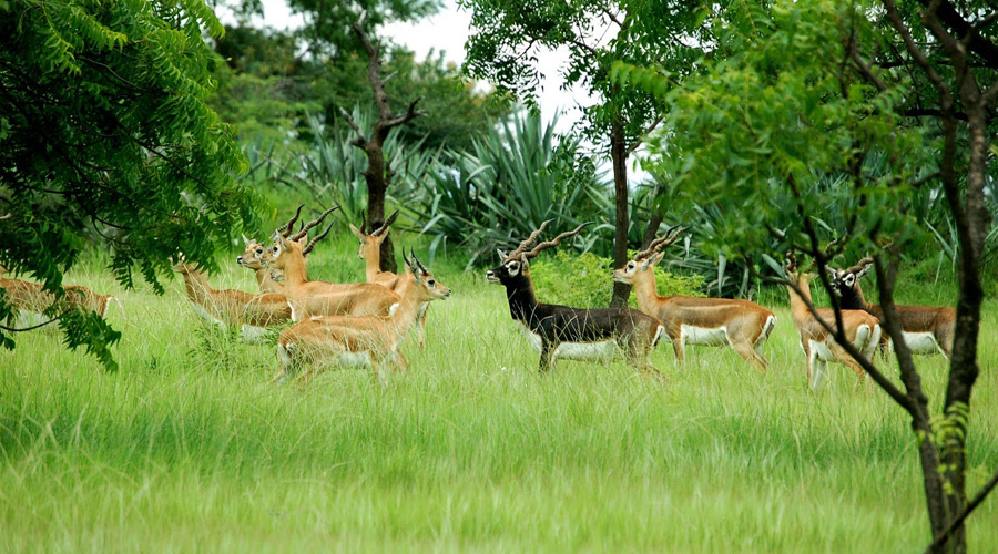 Gir National Park, Sasan Gir, Gujarat, India