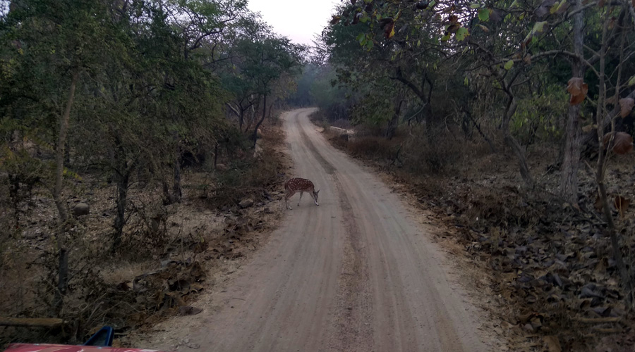 Gir National Park, Sasan Gir, Gujarat, India0