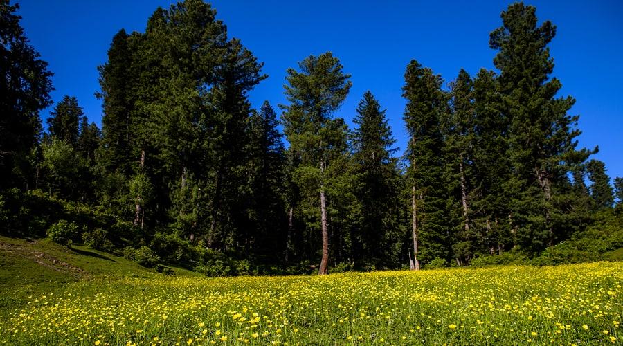 Baisaran Valley, Pahalgam, Jammu and Kashmir, India