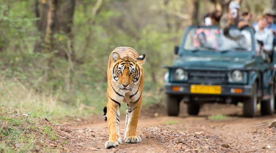 Ranthambore National Park, Ranthambore, Rajasthan, India