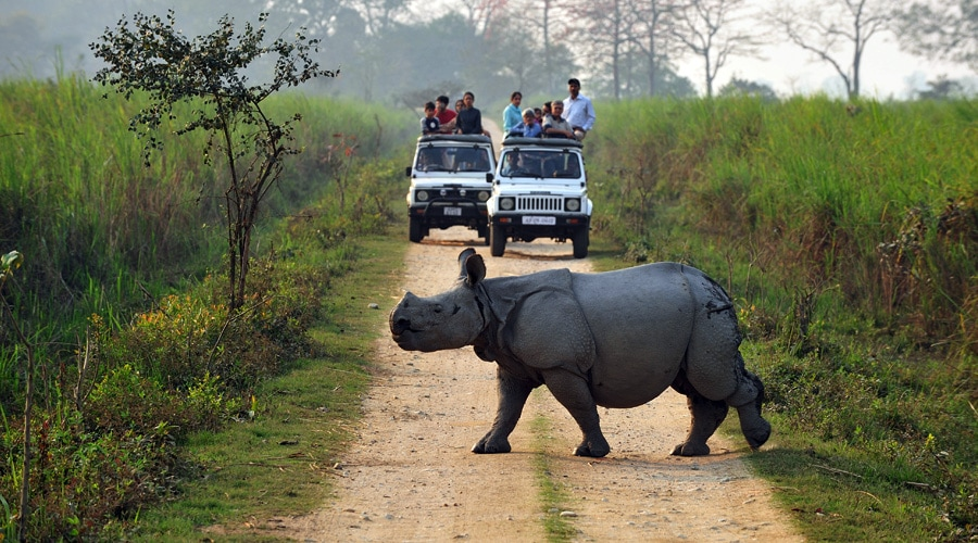 Kaziranga National Park, Kanchanjuri, Assam, India