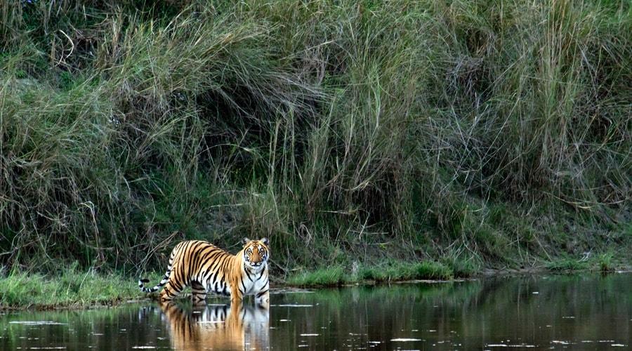 Kaziranga National Park, Kanchanjuri, Assam, India