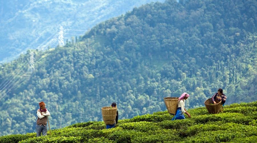 Darjeeling, Sikkim, North East, India