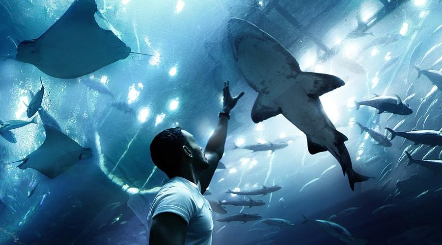 Dubai Aquarium & Underwater Zoo, Dubai Mall, Dubai, United Arab Emirates, Middle East