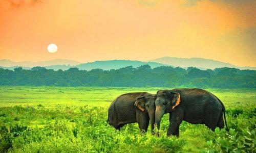 Yala National Park, Katagamuwa, Yala, Sri Lanka, Asia